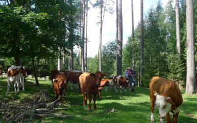 Maaseutu- ja erävihreiden kannanotto: Koko maatalouden tukijärjestelmä kaipaa uudistusta