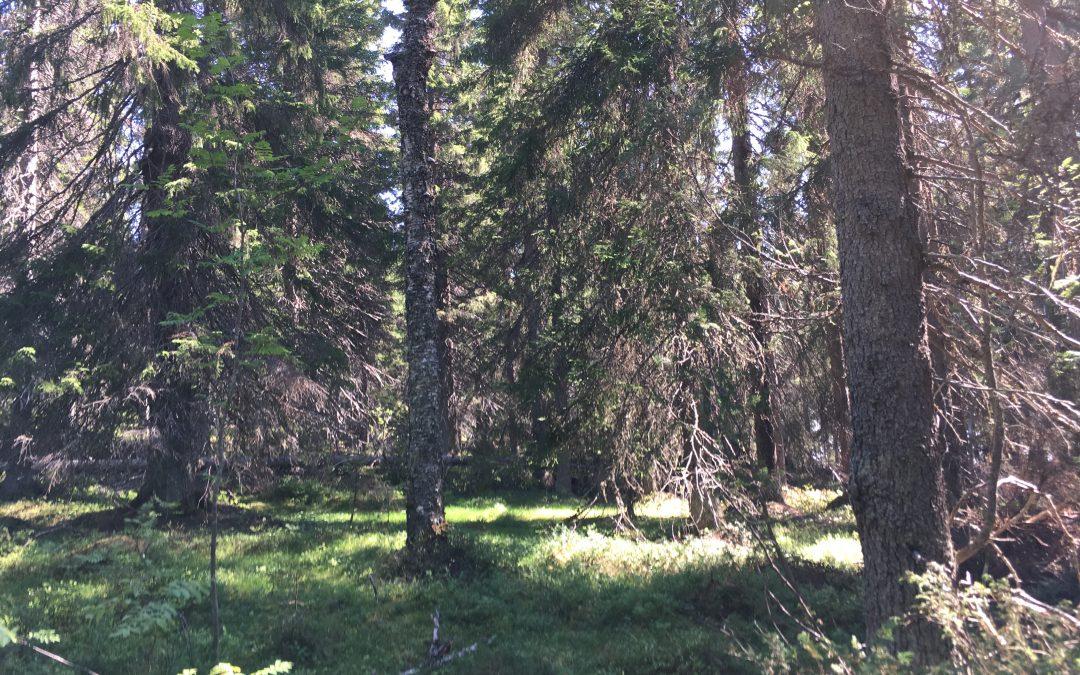 Kestävä metsätalous – Maaseutu- ja erävihreiden metsäpolitiikka